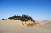 Tree island and deflation plain with ponds in the Umpqua Dunes; Oregon Dunes National Recreation Area, Oregon coast.