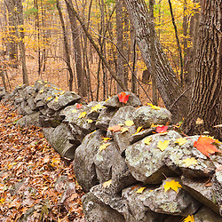 A rock wall next to the Sweet Trail in the Nature Conservancy's Lubberland Creek Preserve in Durham, New Hampshire.