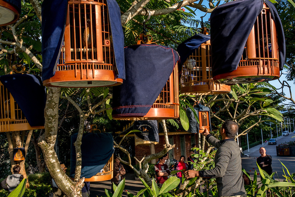 Singing birds hand from trees in their cages in a public park in Xishuangbanna, China.