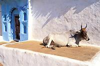 Inde - Rajasthan - Village dans les environs de Chittorgarh // India. Rajasthan. Village around Chittorgarh