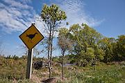 Pukeko, Travis Wetland, New Zealand