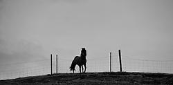 Stallion at Hunsstadir, north of Iceland - Stóðhestur við Húnsstaði