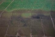 Nederland, Friesland, Gemeente Ferweradeel, 08-09-2009; Detail landaanwinning Noorderleeg (Noarderleech), buitendijks polder en kweldergebied. De zgn. kwelderwerken bestaan uit vakken begrenst door rijshouten golfbrekers die als gevolg hebben dat het slib kan bezinken. Als de kwelders hoog genoeg groeien er er kwelderplanten .Land reclamation, detail, Noorderleeg (Northern Void), polder and salt marsh area outside the dikes. The so-called salt marsh works consist of square sections, bordered by brushwood breakwaters causing  the sludge to settle. If the salt marshes are high enough plants start growing, yielding more alluvial land.luchtfoto (toeslag); aerial photo (additional fee required); .foto Siebe Swart / photo Siebe Swart