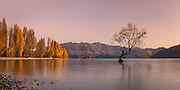 A large panoramic of a subtle sunrise over the lone willow tree at Lake Wanaka, New Zealand.