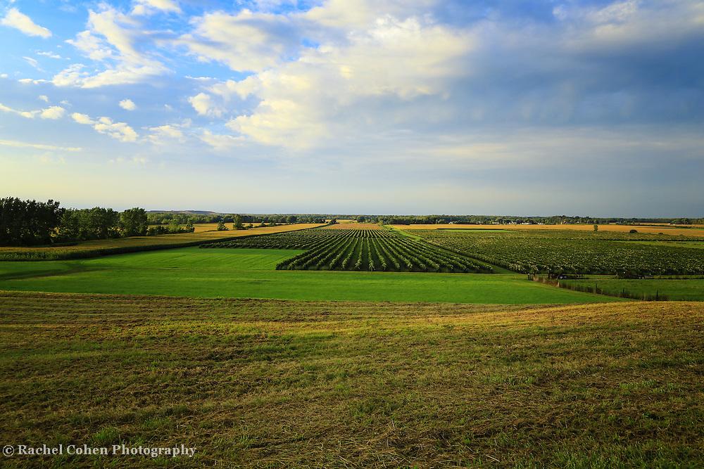 &quot;Vineyards Lewiston New York&quot;<br /> <br /> Scenic vineyards and farm land in Lewiston New York!!<br /> <br /> Landscapes by Rachel Cohen