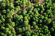 Aerial view of a Mediterranean forest