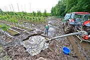 Nederland, the Netherlands, Beugen, 16-6-2016Waterplassen en verdronken land bij een boomkwekerij in de omgeving van Boxmeer door de zeer plaatselijke, lokale, hoosbuien van de afgelopen weken. Een grote schadepost voor de akkerbouwers Deze kweker probeert het water met een mestpomp weg te pompen .Foto: Flip Franssen