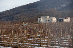 Wineyard near City of Vrsac during 5th day of 10th EHF European Handball Championship Serbia 2012, on January 19, 2012 in Vojvodina, Serbia.  (Photo By Vid Ponikvar / Sportida.com)