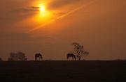Horses, Ireland, sunset<br />