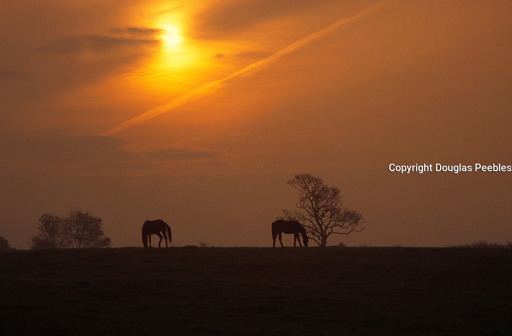 Horses, Ireland, sunset<br />