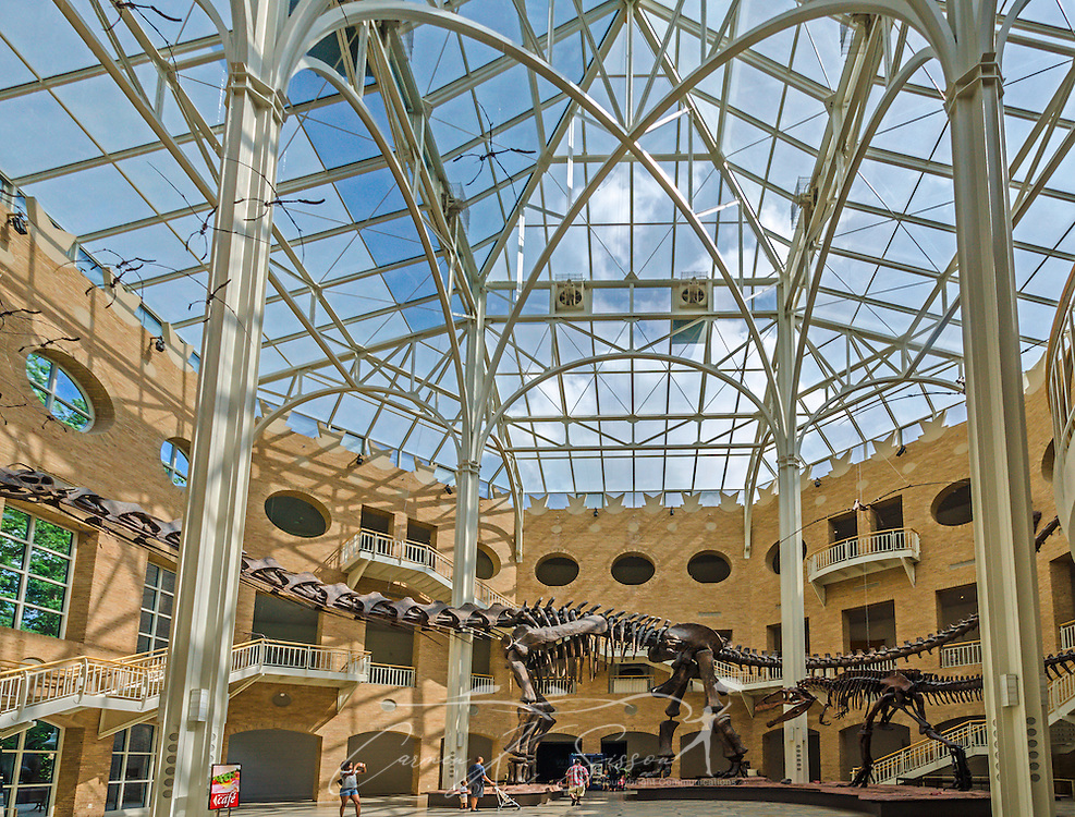 "Visitors walk through the Great Hall at Fernbank Museum of Natural History, May 23, 2014, in Atlanta, Georgia. The large dinosaur to the left is Argentinosaurus, a plant-eating dinosaur that weighed more than 100 tons and was 123 feet long. The dinosaur to the right is Gigantosaurus, which weighed eight to 10 tons and was the largest meat-eating dinosaur. Fernbank opened in 1992 and is known for its massive dinosaur exhibitions. The museum also has an IMAX theater and holds popular public events like monthly salsa dance nights and the weekly ""Martinis & IMAX"" program. (Photo by Carmen K. Sisson/Cloudybright)"