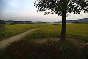 A park in Guri, east of Seoul, May 7, 2014. Photo by Lee Jae-Won (SOUTH KOREA) www.leejaewonpix.com/