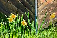 Blommor mot stäv på träbåt
