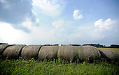 8.6.13-Farming photo