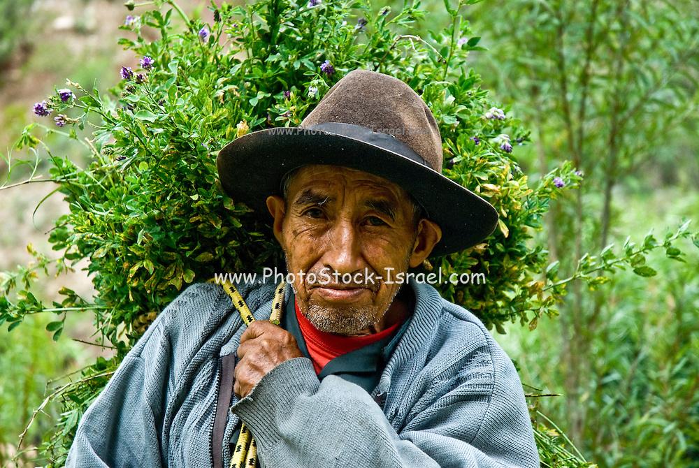 Argentina, indigenous man