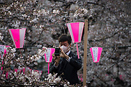 A salary man takes a picture of cherry blossoms on his way to work at Nakameguro in Tokyo on April 3rd. The cherry blossom season in Japan kicks off boozy parties across the country and draws tourists from far and wide. 03/04/2017-Tokyo, JAPAN