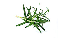 Close-up of rosemary on white background
