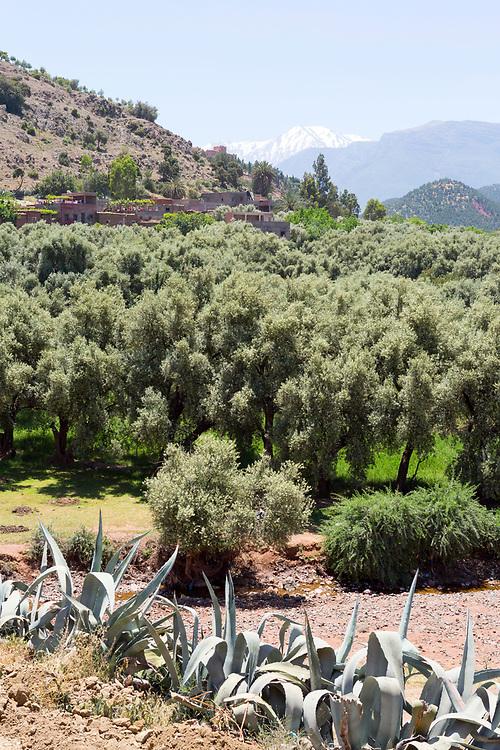 Tafza region mountain landscape, Ourika Valley, Morocco
