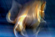 Abstract defocused colour lights reflecting off a white dog with motion resembling flames
