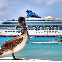 Brown Pelican and Cruise Ship in San Miguel, Cozumel, Mexico <br />