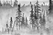 Trees in fog at sunrise <br />