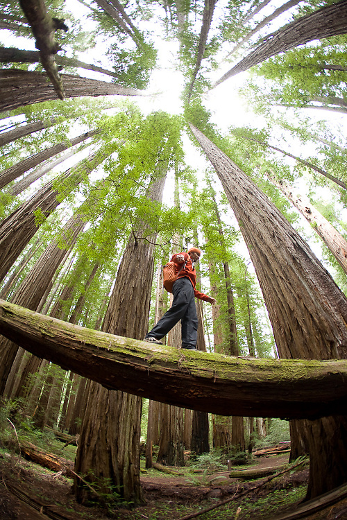 Young man hiking in Redwood National Park, CA