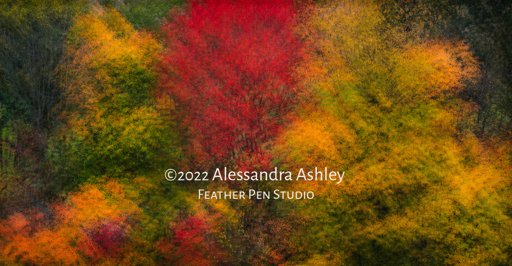 In-camera multiple exposure montage.  Autumn foliage, wooded valley viewed from hilltop.
