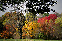 The season's peak fall foliage at Awbury Arboretum, on November 9, 2017. The non-profit arboretum is located in the Germantown section of Philadelphia, PA.