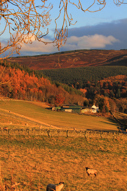 Sunset view overlooking the Dawyck end of the Upper Tweeddale region of the Scottish Borders during late autumn