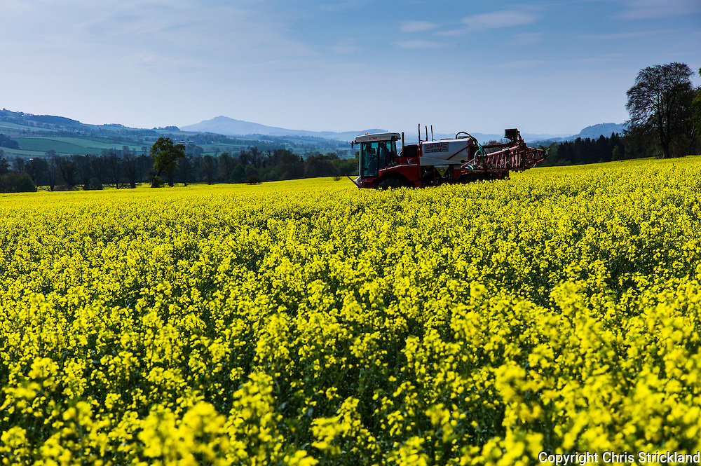 Ancrum, Jedburgh, Scottish Borders, UK. 11th May 2016. A farmer sprays an oil seed rape field on a glorious hot day in the Borders.