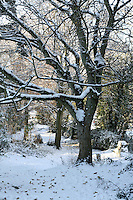Snow covered trees on Killiney Hill Dublin