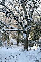 Snow covered trees on Killiney Hill Dublin