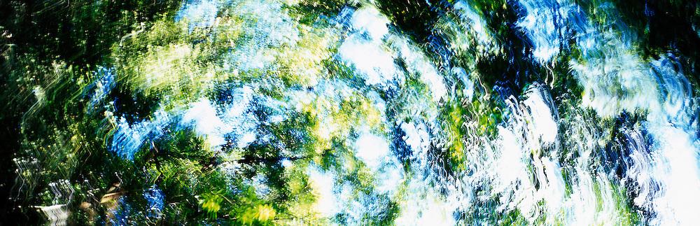 Rainforest reflections