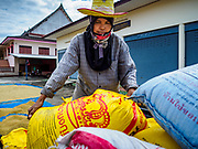 08 NOVEMBER 2017 - SI NAWA, NAKHON NAYOK, THAILAND: A worker unloads freshly harvested rice at a local Buddhist temple during the 2017 rice harvest in Nakhon Nayok province. The rice will be spread out to dry in the temple's parking lot. Thailand is the second leading rice exporter in the world and 16 million Thais work in the rice industry.       PHOTO BY JACK KURTZ