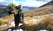 Queenstown-Pine tree eradication scheme,  Pine tree eradication scheme 26 July 2013