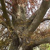 2013_06 Tree Walk