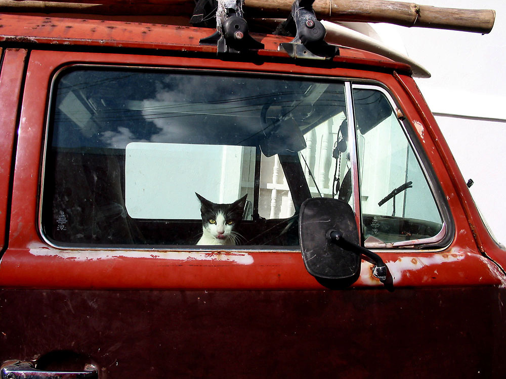 Cat in Volkswagen Bus in San Juan, Puerto Rico
