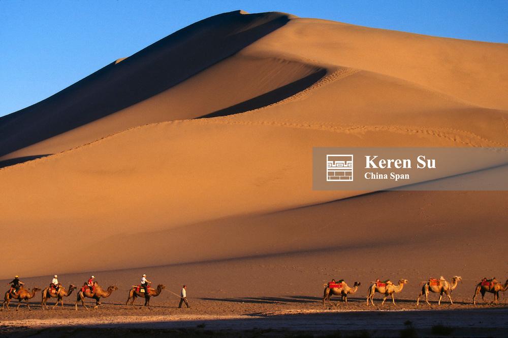 Camel caravan with sand dunes at sunset, Dunhuang, Gansu Province, Silk Road, China