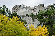 Yellow fall colors at Mount Rushmore National Memorial, Keystone, South Dakota, USA. Sculptor Gutzon Borglum designed and oversaw the project 1927–1941, with help from his son, Lincoln Borglum. Mount Rushmore features 60-foot sculptures of the heads of four United States presidents: George Washington (1732–1799), Thomas Jefferson (1743–1826), Theodore Roosevelt (1858–1919), and Abraham Lincoln (1809–1865). South Dakota historian Doane Robinson conceived the idea of carving the likenesses of famous people into the Black Hills in order to promote tourism. Robinson's initial idea of sculpting the Needles was rejected by Gutzon Borglum due to poor granite quality and strong opposition from Native American groups. They settled on Mount Rushmore, and Borglum decided on the four presidents. Each president was originally to be depicted from head to waist, but lack of funding ended construction in late October 1941. Mount Rushmore is a batholith (massive intrusive igneous rock) rising to 5725 feet elevation in the Black Hills.