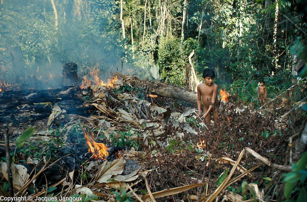Slash-and-burn agriculture by Indians of Guiana Highlands of Venezuela: boys setting fire to cut forest to cultivate it; ashes provide fertilizer