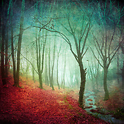Misty forest with creek on a late fall morning - textured photograph<br /> Redbubble prints --&gt; https://rdbl.co/2y08kqB