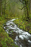Gorton Creek, Columbia River Gorge National Scenic Arae, Oregon