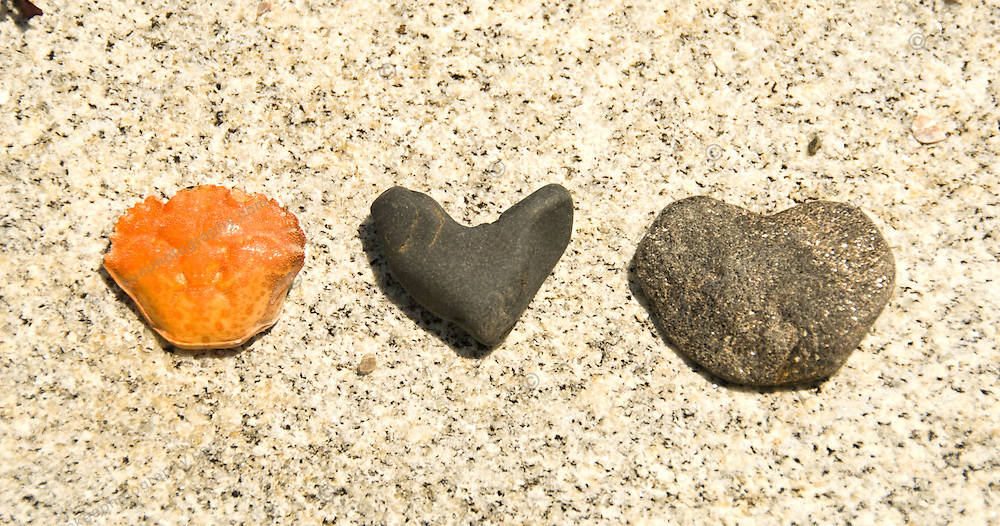 Two heart shaped rocks and a crab shell, illustrating a three way love affair. Not quite a love triangle.