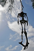 A skeleton is hanging from the branch of a tree.