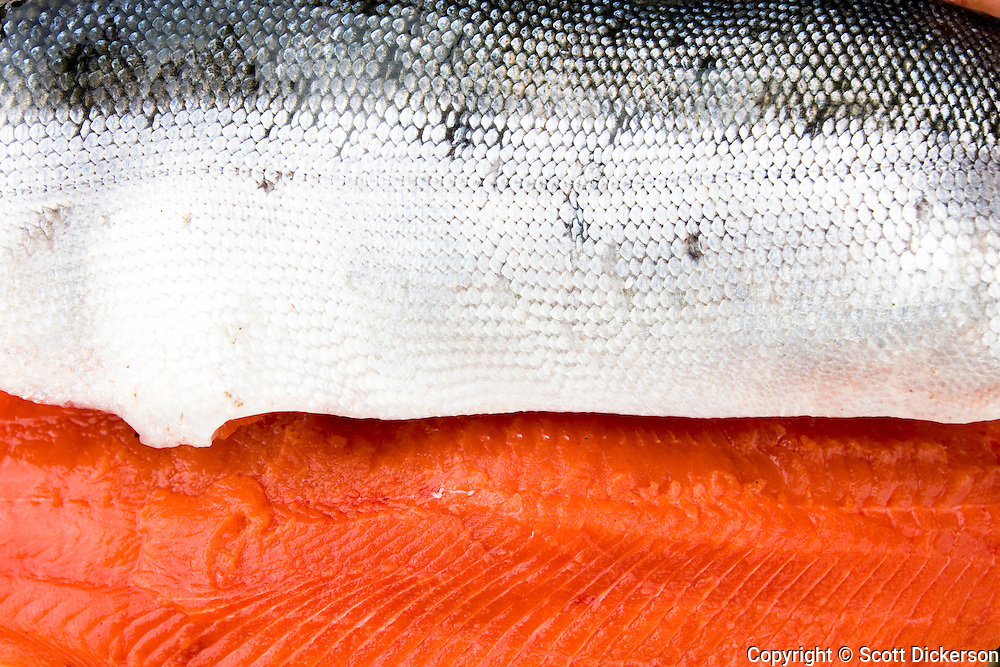 The scales and meat of a freshly caught Sockeye salmon from the Mulchatna River in Bristol Bay, Alaska.