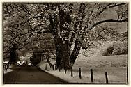 Black/white infrared of Sparks Lane, Cades Cove, Smokies, TN