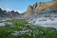 Mount Helen amd field of purple Asters growing in Upper Titcomb Basin, Bridger Wilderness, Wind River Range Wyoming