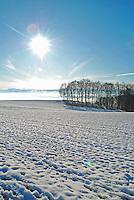 A brilliantly sunny scene in wintry Zufikon, Aargau, Switzerland.