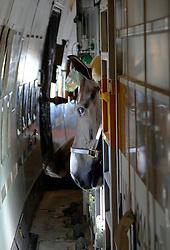Horse traffic -  Airplane<br /> © Dirk Caremans