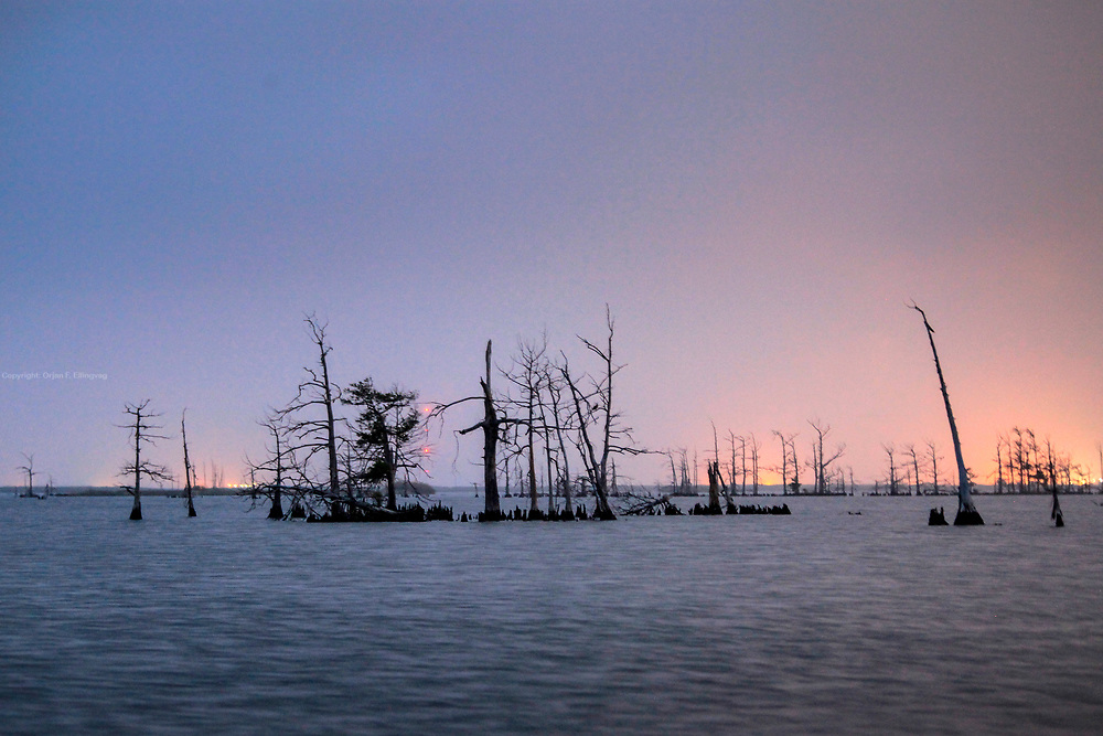 Dead trees in a flooded area of the marshland in the Mississippi delta. An oil slick from the Deepwater Horizon explosion threatens the wetlands surrounding the Gulf of Mexico.